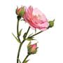 Damaszener Rose